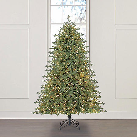 Member's Mark 7.5' Linden Spruce Christmas Tree