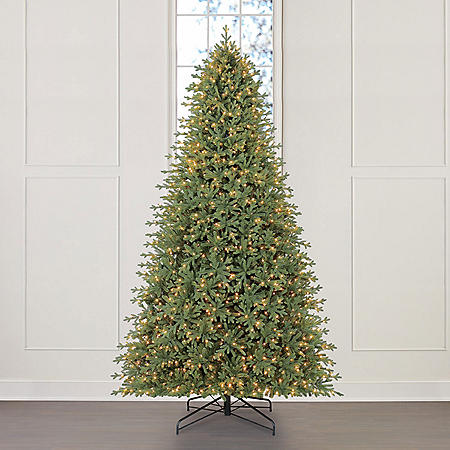 Member's Mark 12' Linden Spruce Christmas Tree
