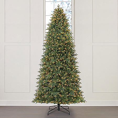 Member's Mark 12' Frasier Fir Christmas Tree