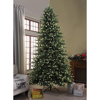 Member's Mark 9 ft. Butternut Fir Christmas Tree - Sam's Club