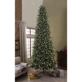 Welch Pine Christmas Tree