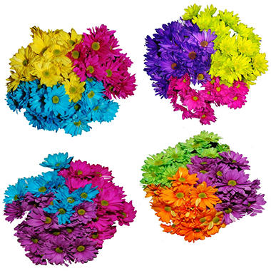 Poms - Tinted Assorted - 60 Stems