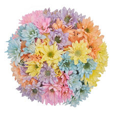 Poms - Pastel Assorted (60 Stems)