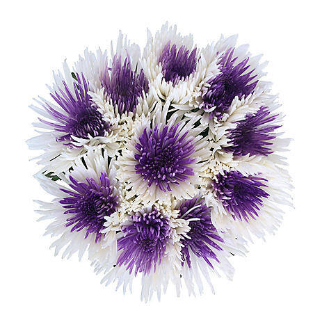 Innie/Outtie Disbuds - Purple and White - 60 Stems