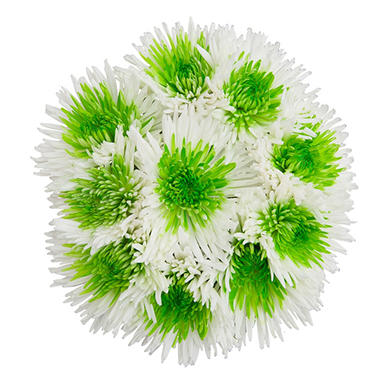 Innie/Outtie Disbuds - Green and White - 60 Stems