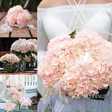 hydrangea, bridal pink  stems  sam's club, Beautiful flower
