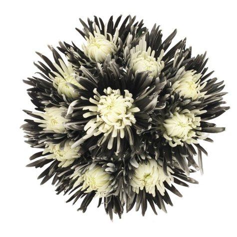 Innie/Outtie Disbuds - Black & White - 60 Stems