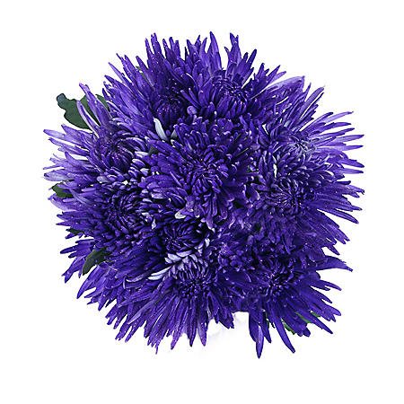 Spider Mums - Painted Glitter Purple - 60 Stems