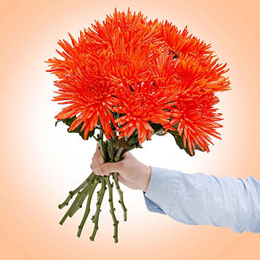 Spider Mums - Painted Glitter Orange - 60 Stems