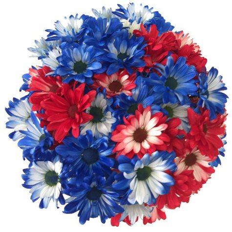 Painted Patriotic Pompon (60 Stems)