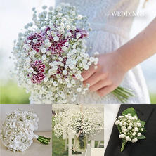 Gypsophila, Xlence (13 bunches)