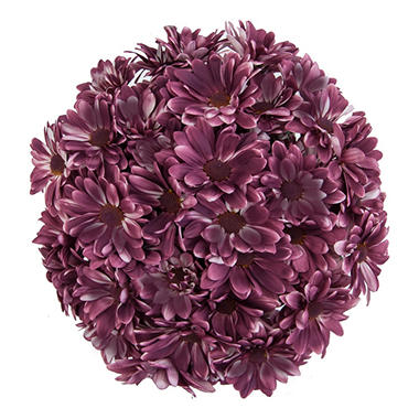 Pompon Painted Sangria (60 Stems)