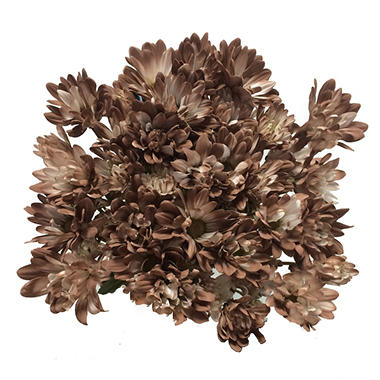 Pompon Painted Cognac (60 Stems)