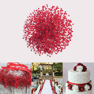 Red Tinted Gypsophila (60 Stems)