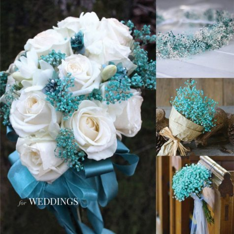 Blue Tinted Gypsophila (60 Stems)