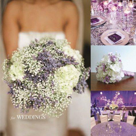 Glitter & Tinted  Lavender Gypsophila (60 Stems)