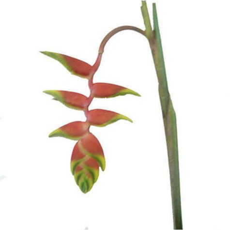 Heliconia Rostrata - 15 Stems