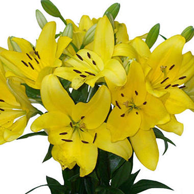 Asiatic (LA) Lilies - Yellow - 80 Stems