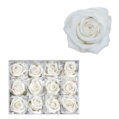 Infinite Rose - White - 12 Rose Heads