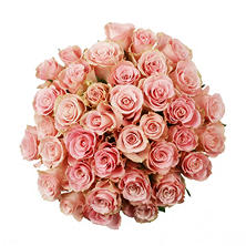 Roses, Light Pink (75 stems)