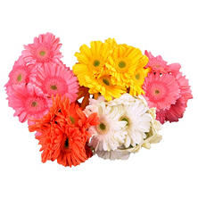 Gerbera Daisies - Assorted Pastels - 50 Stems