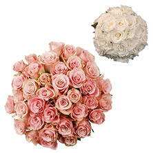 Roses - Wedding Pack, Light Pink & White (75 stems)