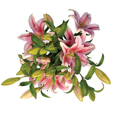 Starfighter Lily - White & Red - 25 Stems