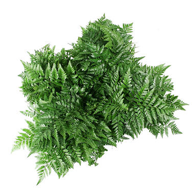Leather Fern Grower Bunch - Assorted - 200 Stems
