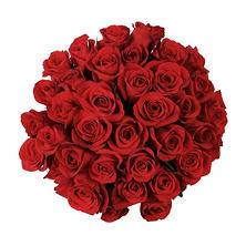Roses, Red (75 stems)