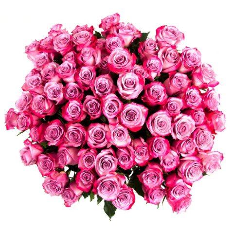 Roses, Lavender (75 stems)