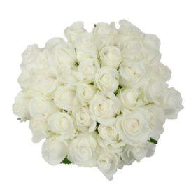 Roses, White (75 stems)
