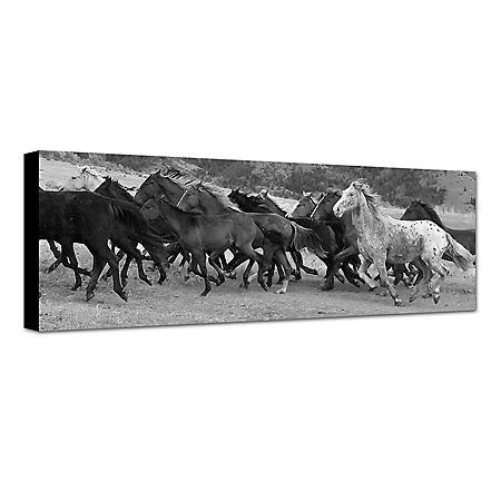 BLCK AND WHTE HORSES