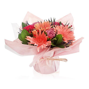 Mini Arrangement, Elegant Pink Daisies (5 arrangements)