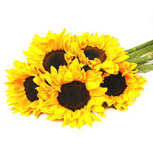Sunflowers, Yellow (40 stems)
