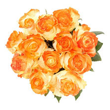 Painted Fantasy Rose, Orange (50 stems)