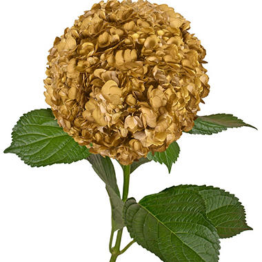 Painted Hydrangeas, Metallic Yellow (Choose 14 or 26 stems)