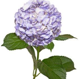 Painted Hydrangeas Lavender 14 Stems