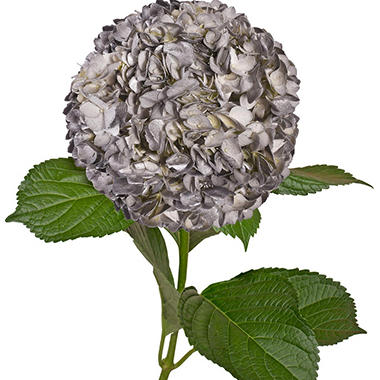 Painted Hydrangeas, Silver with Glitter (Choose 14 or 26 stems)
