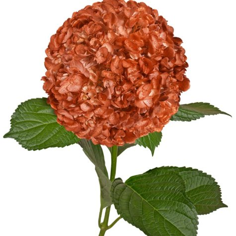 Painted Hydrangeas, Metallic Orange with Glitter (Choose 14 or 26 stems)