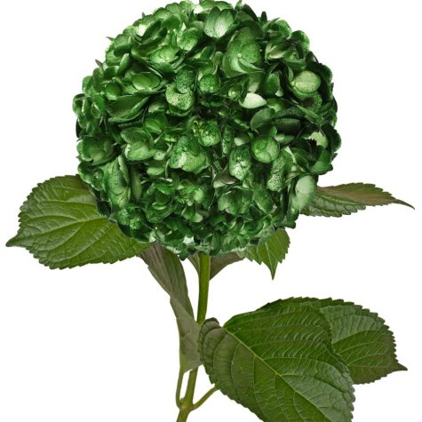 Painted Hydrangeas, Metallic Green with Glitter (Choose 14 or 26 stems)