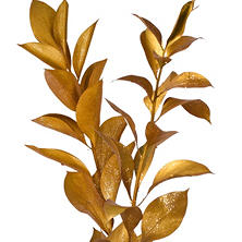 Painted Ruscus, Metallic Yellow with Glitter (Choose 60 or 120 stems)