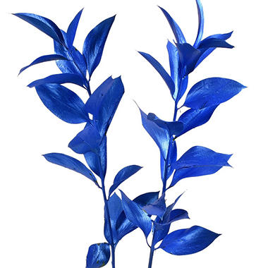 Painted Ruscus, Metallic Blue (Choose 60 or 120 stems)