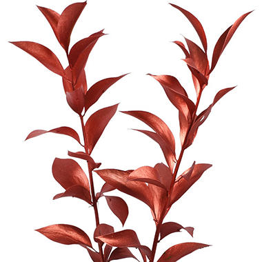 Painted Ruscus, Bronze (Choose 60 or 120 stems)