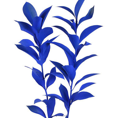 Painted Ruscus, Dark Blue (Choose 60 or 120 stems)