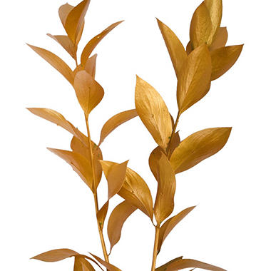 Painted Ruscus, Metallic Yellow (Choose 60 or 120 stems)