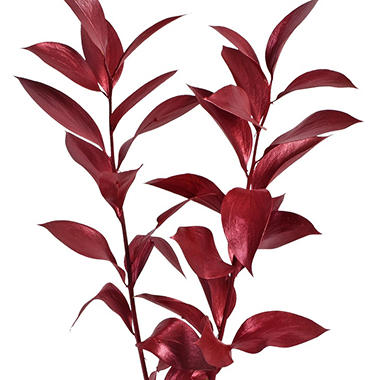 Painted Ruscus, Metallic Red (120 Stems)