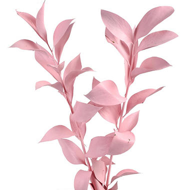 Painted Ruscus, Pink (60 stems)