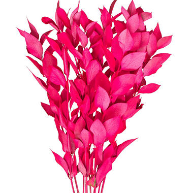 Painted Ruscus, Neon Hot Pink (120 stems)