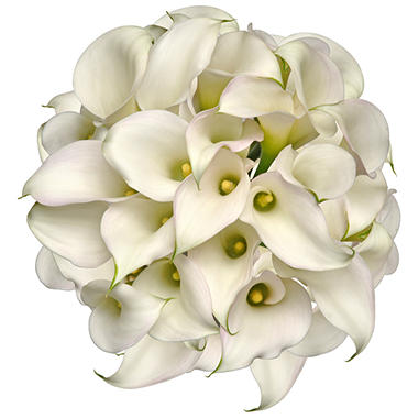 LINKED Mini Calla Lily - White  - 100 Stems