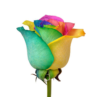 Offline roses rainbow tinted 100 stems sam 39 s club for How much are rainbow roses